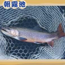 魚種:いわな サイズ:40cm~50cm