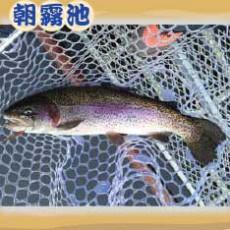 魚種:ニジマス サイズ: 25〜65cm